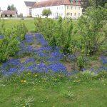 Blautöne im Garten